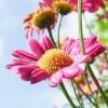 flower-367857_1280