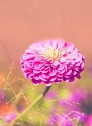 flower-1201262_1920